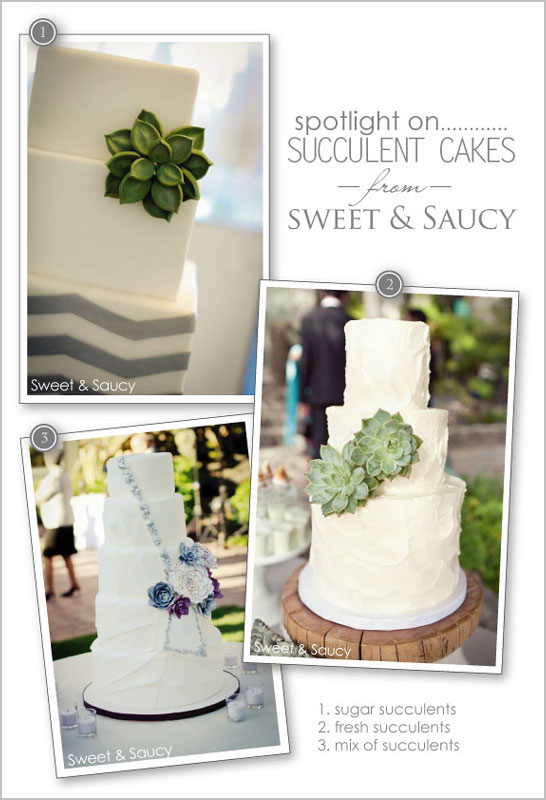 Succulent Cakes by Sweet & Saucy