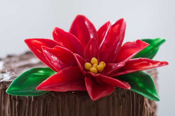 Chocolate Poinsettias - learn how to make these chocolate flowers with candy melts and a knife | Erin Gardner for TheCakeBlog.com